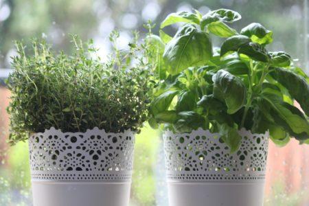 podsumowanie miesiąca o zapachhu bazyliowego pesto